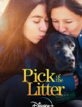 Pick of the Litter (TV Mini-Series)