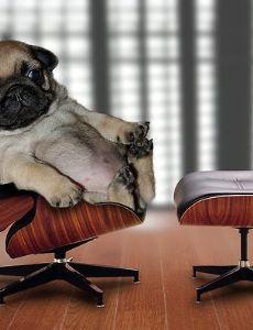 Top Dog (rapper)