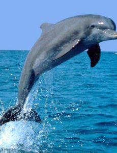 Dolphin (musician)